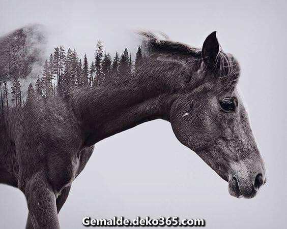 12 Fotografien dieser künstlerischsten Pferde — Bilder