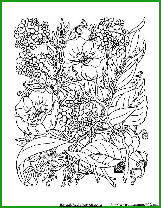malvorlage blumen skizze wildblumen — bilder